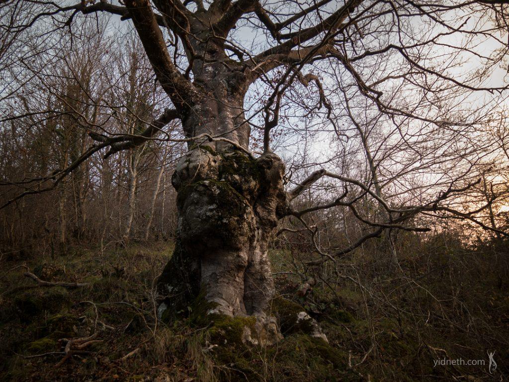 oak pareidolia